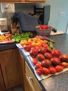 Harvest on 8-17